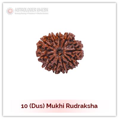 10 (Dus) Mukhi Rudraksha