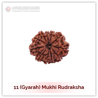 11 (Gyarah) Mukhi Rudraksha