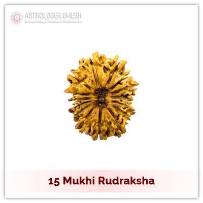 15 (Pandrah) Mukhi Rudraksha