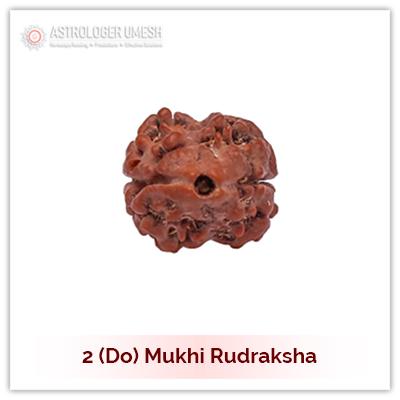 2 (Do) Mukhi Rudraksha