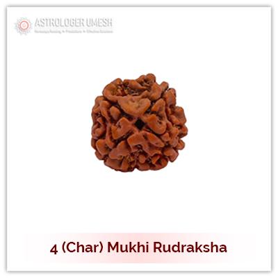 4 (Char) Mukhi Rudraksha