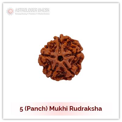 5 (Panch) Mukhi Rudraksha