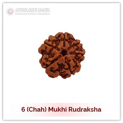 6 (Chah) Mukhi Rudraksha