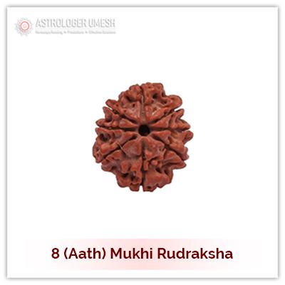 8 (Aath) Mukhi Rudraksha