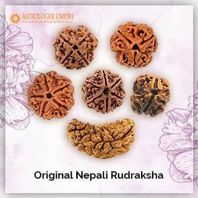 Original Nepali Rudraksha